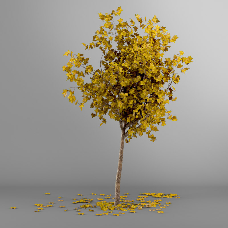 3d model of autumn tree bark