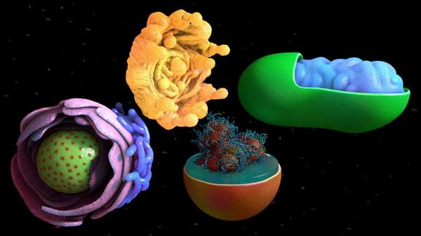 cell components nucleus mitochondrium 3d model