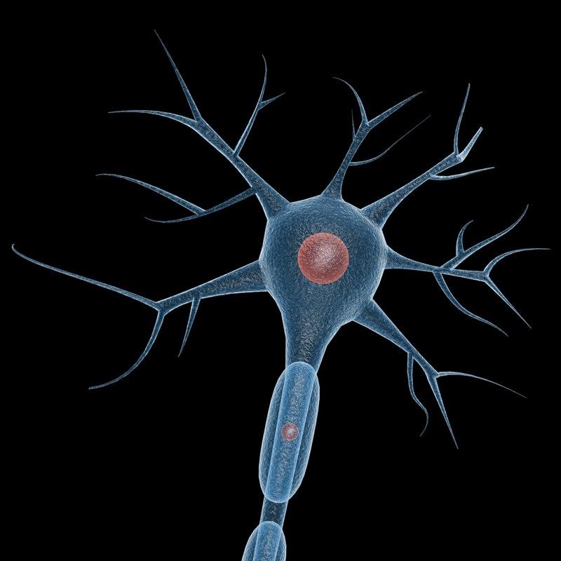 3ds neuron