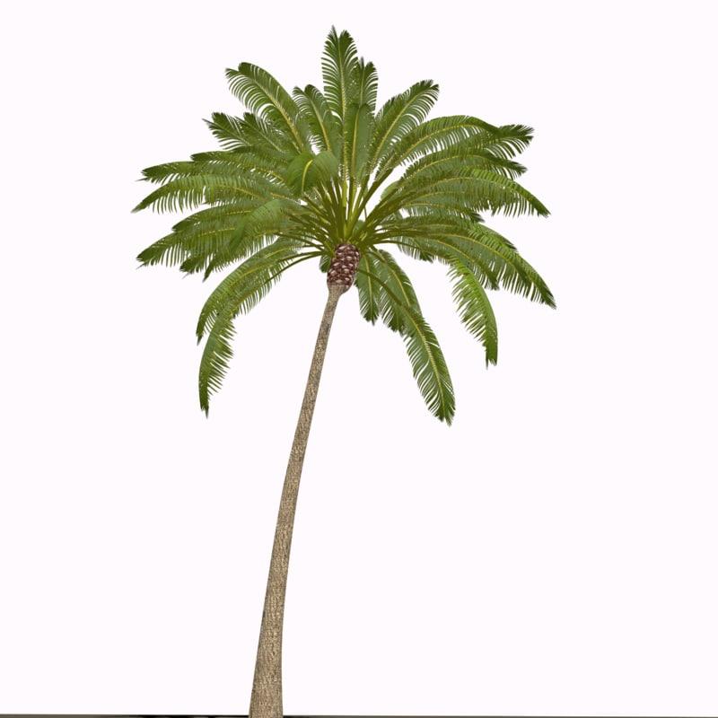 3d model palm tree