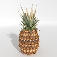 Realistic Pineapple