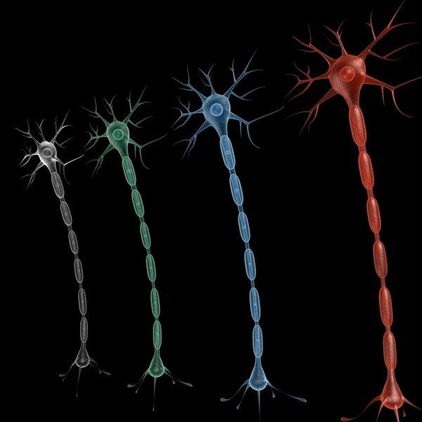 3d neuron model