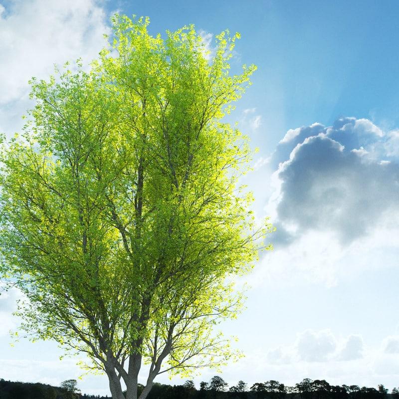 tree trunk 3d max