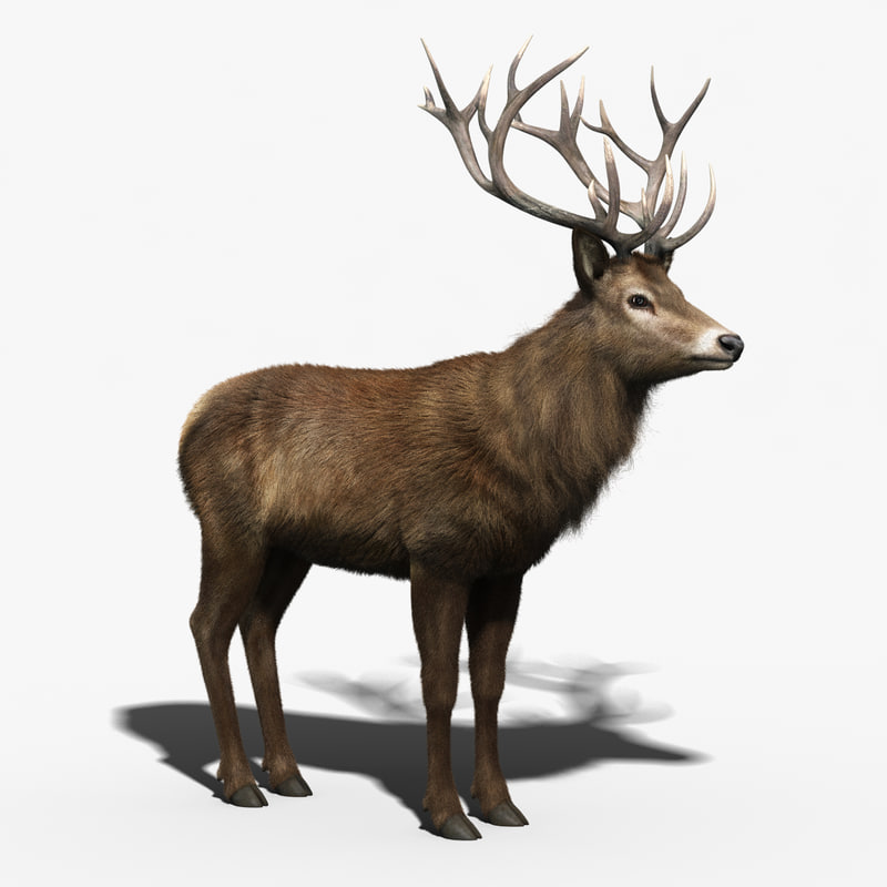 3d red deer stag fur model
