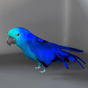 3d obj parrot birds macaws