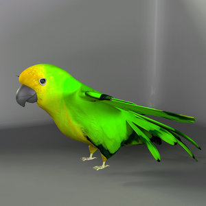 3d ma parrot birds macaws