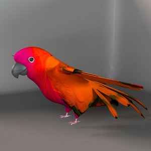 3d model parrot birds macaws