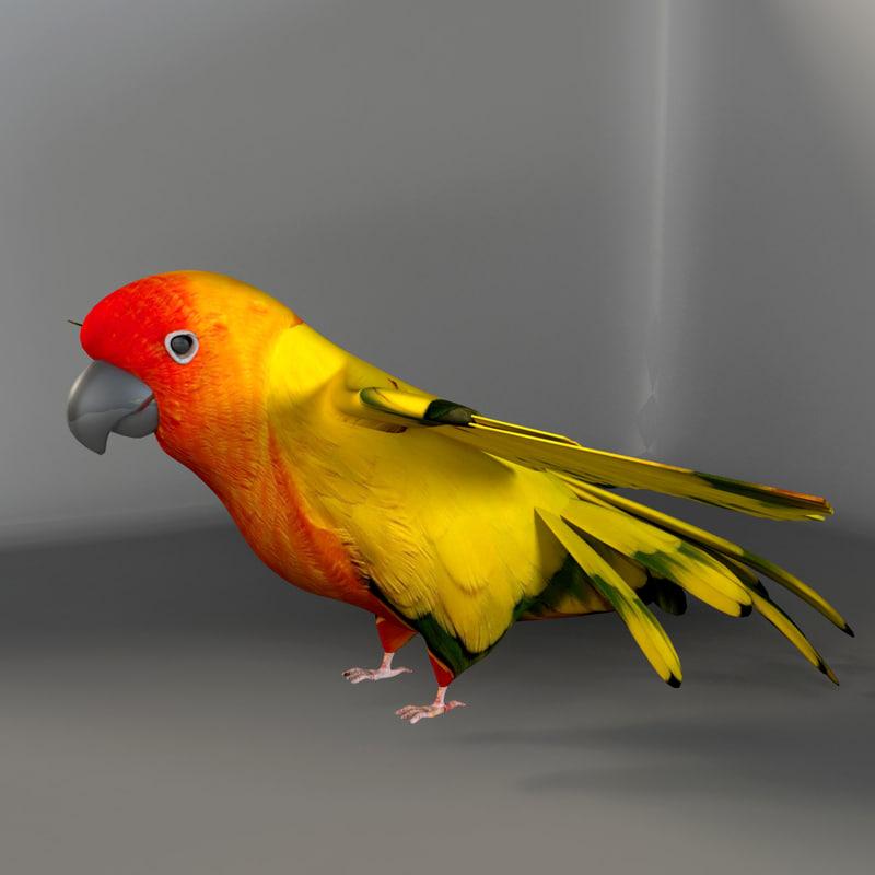 maya parrot birds macaws
