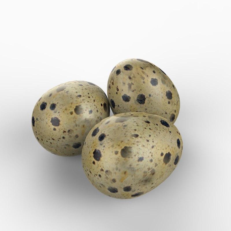 3d realistic quail egg model