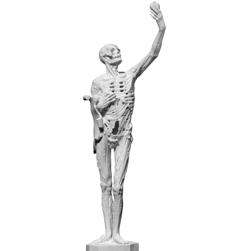 Free 3D Skeleton Models | TurboSquid