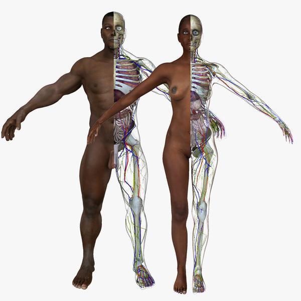 3d model male african american body anatomy