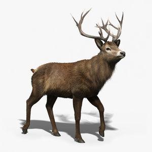 red deer stag fur 3d max