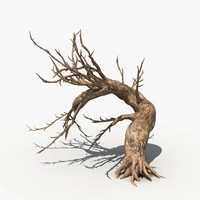 Dry Tree 04