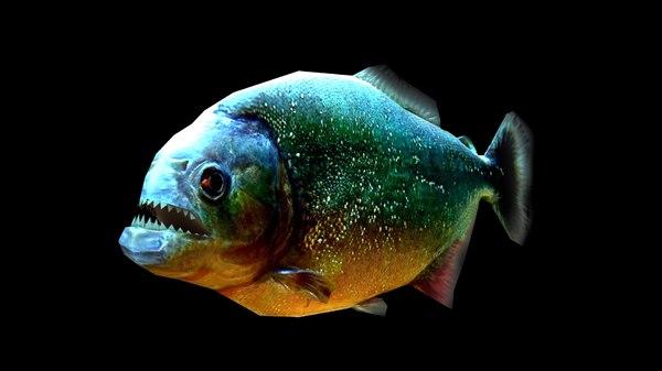 rigged piranha 3d max