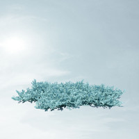 juniperus squamata tropical blue 3d max