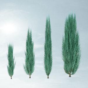 juniperus scopulorum skyrocket 3d max