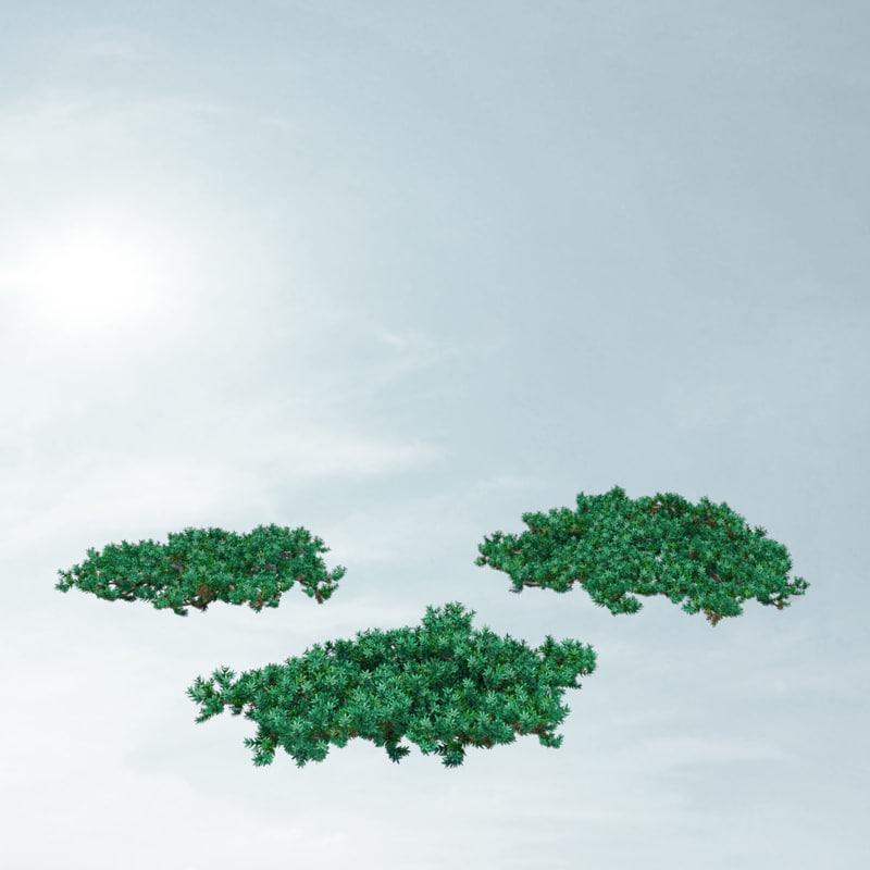 3d juniperus procumbens nana model
