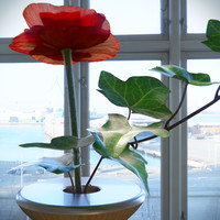 Decor Flower Poppy & Vase