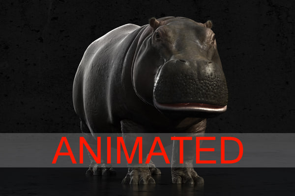 3d model of realistic animation hippo