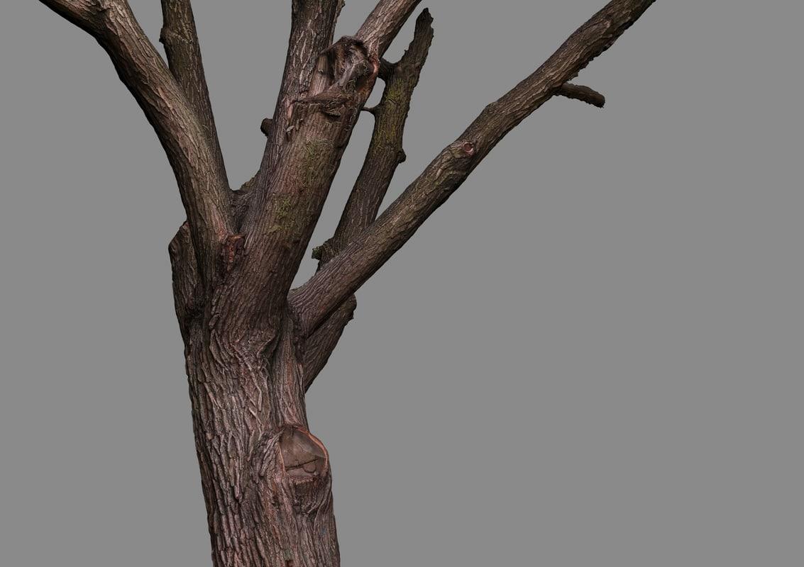 3d oak raw scan