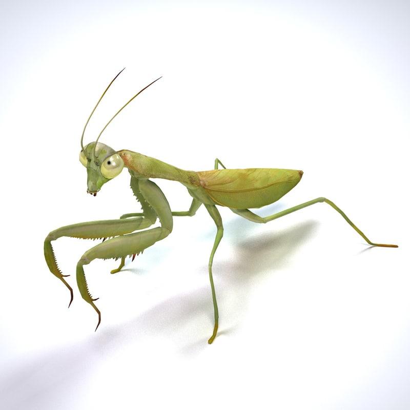 mantis 3d model