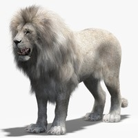lion white 2 fur 3d model