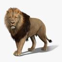 Big cats 3D models