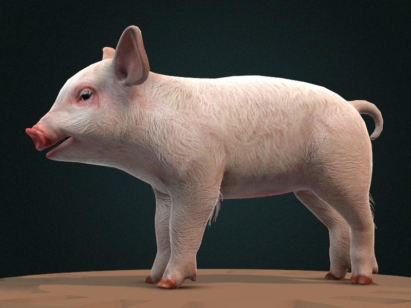 maya pig piglet