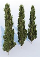 thuja tree 3d model