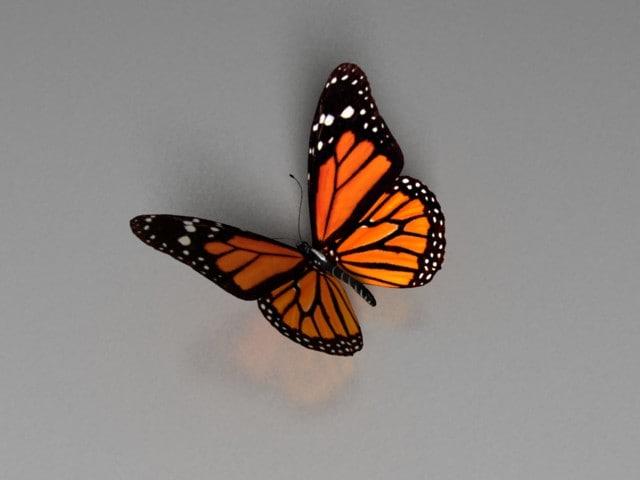 realistic butterfly obj