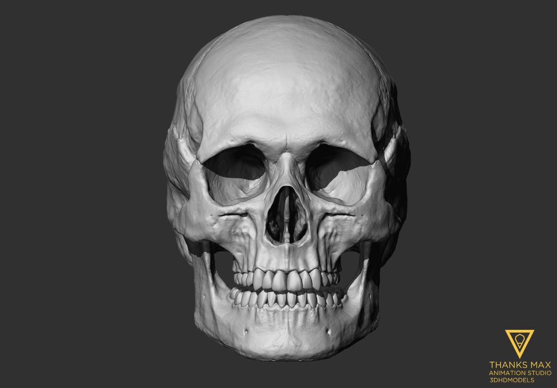 human skull european female 3ds