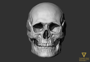 human skull european female 3ds
