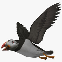 "Fratercula Arctica ""Atlantic Puffin"