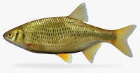 3d model notemigonus crysoleucas golden shiner