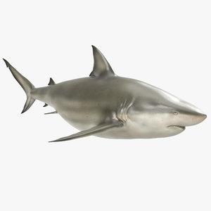 pigeye shark 3d max
