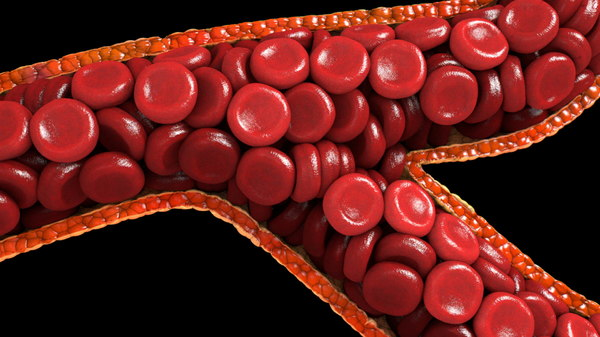 3d small branched blood vessel model
