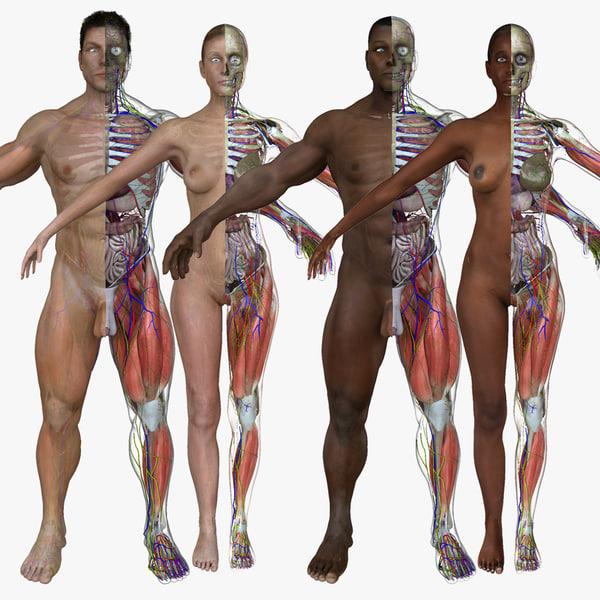 maya ultimate anatomy combo
