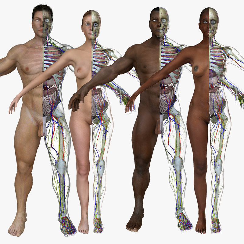 body anatomy systems combo 3d ma
