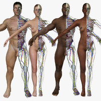 Full Body Anatomy Systems Combo