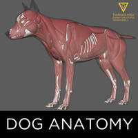 Dog Anatomy Canine