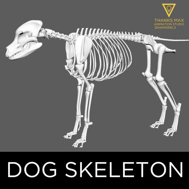 3d Canine Skeleton Bones Model