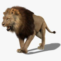 Lion (3) (Animated) (Fur)
