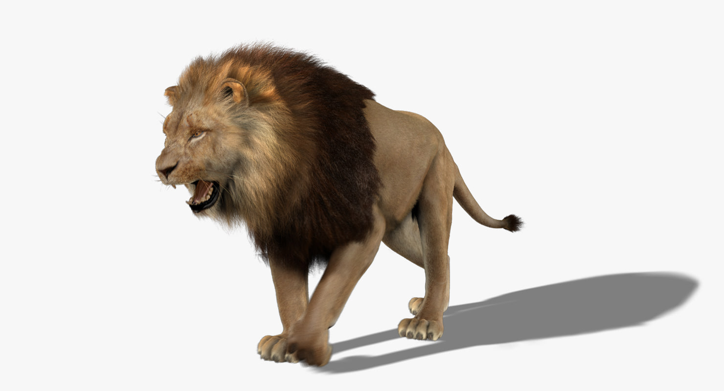 3d ma lion fur animation