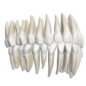 3dsmax teeth
