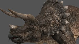 3d triceratops model