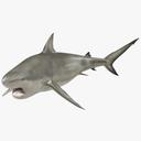 pigeye shark 3D models
