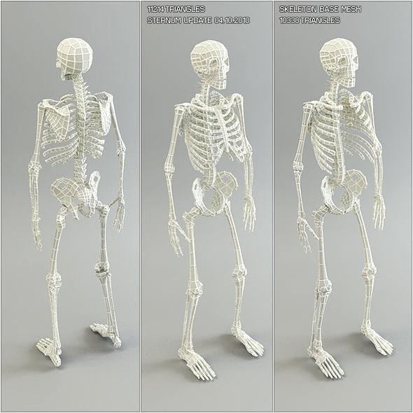 3d skeleton base mesh