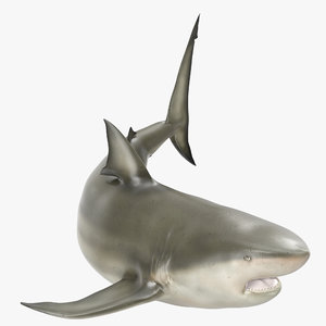 pigeye shark rigged 3d model