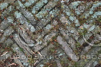 Paving_Texture_0013