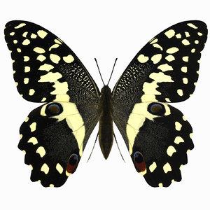 3d citrus swallowtail butterfly